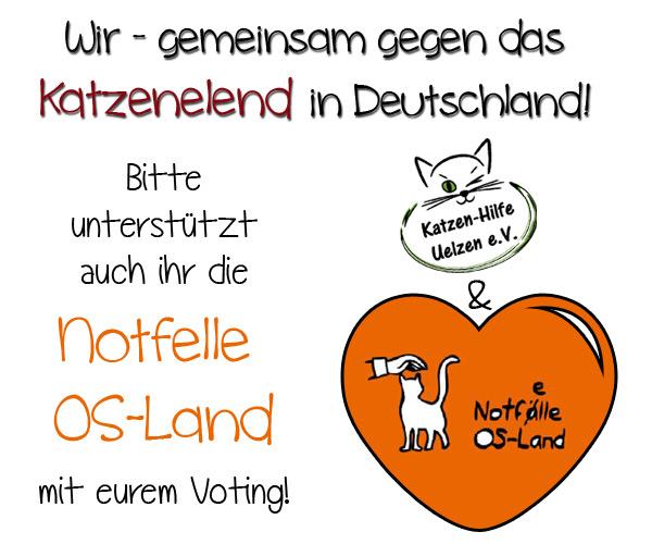 Gemeinsam gegen das Katzenelend in Deutschland