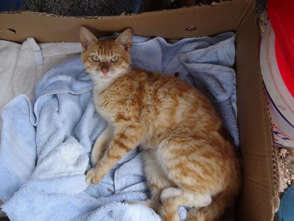 Verletzte Katzenmama