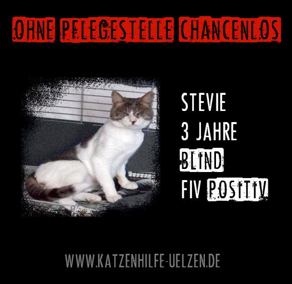 Stevie: PS gesucht