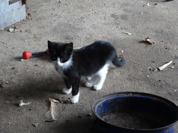 Kitten und Fischgräten