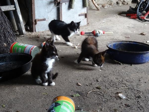 Die Kitten