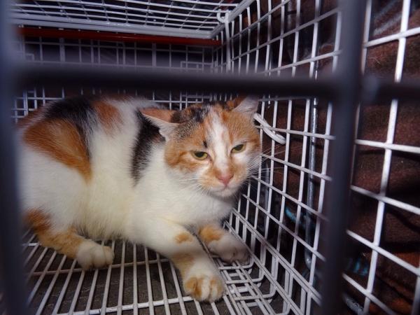 zweite Katze
