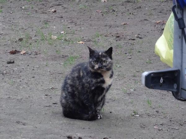 2. Katze
