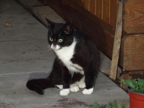 3. Katze