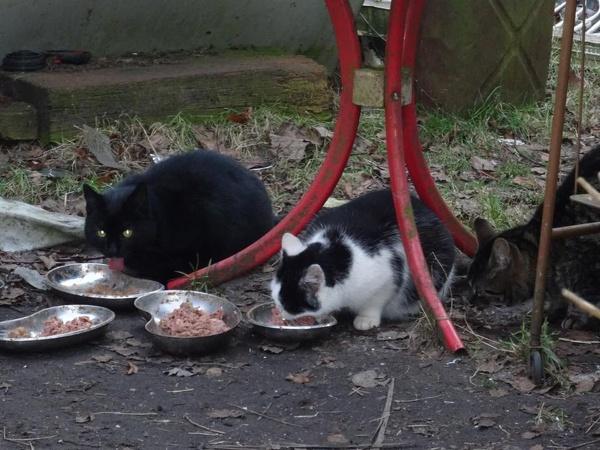 Futter, für viele Katzen selbstverständlich, aber nicht für alle