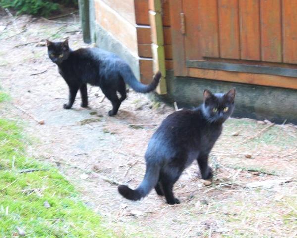 beide Jungkatzen sind im August 2014 geboren und recht zutraulich