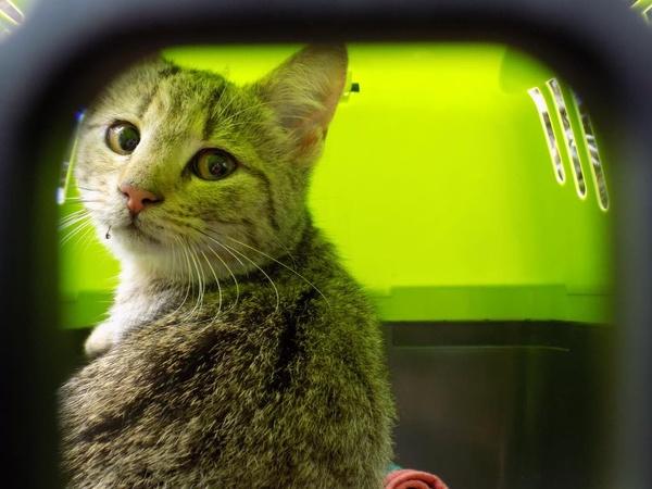 junges Katzenmädel sucht Kastrationspate