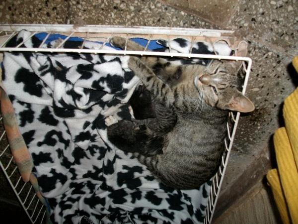 Mama mit Kitten