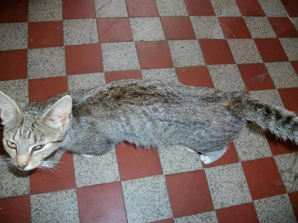 Katzen aus SAW