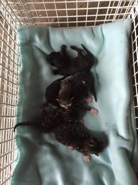 Fünf Kitten