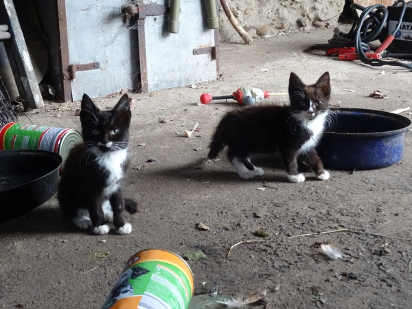 Kitten 5