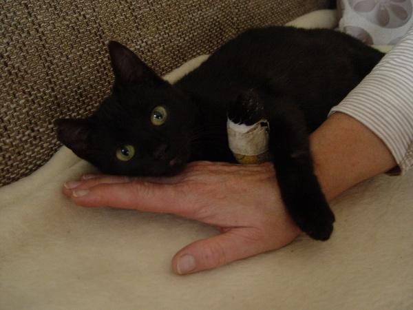 Kätzchen sucht Pflegestelle